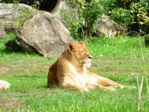 zoo-zln-len-lev